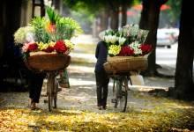 Đẹp nao lòng những chiếc xe đạp chở hoa trên phố