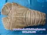 Tôm Mũ Ni Lbacus ciliatus