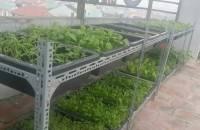 Kệ trồng rau cây c...