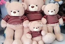 Ban-gau-Teddy-1m2-den-1m8-chinh-hang