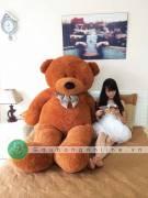 Gấu Bông Teddy To