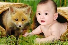 Dạy Bé Học Về Các Loài Vật