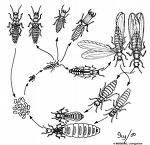 Nhận diệt, phòng mối và côn trùng gây hại.